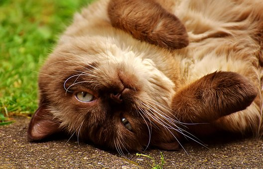 Kattengedragsdeskundige Breda