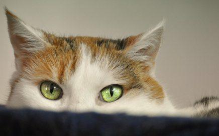 Gedragsproblemen Bij Katten Toegelicht De Vrolijke Huiskat