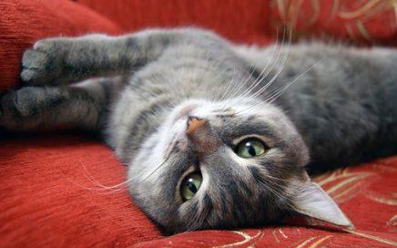 Verrijking voor katten