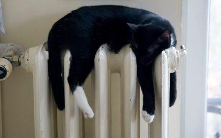 Wat kun je doen bij oververhitting bij katten?