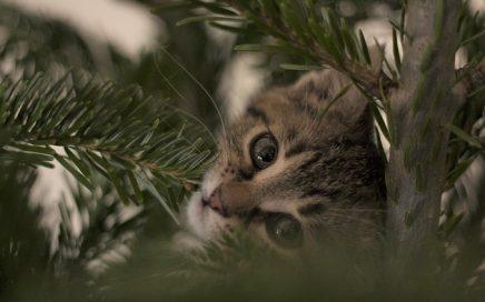 Katten in kerstbomen