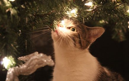 kerstversiering en katten