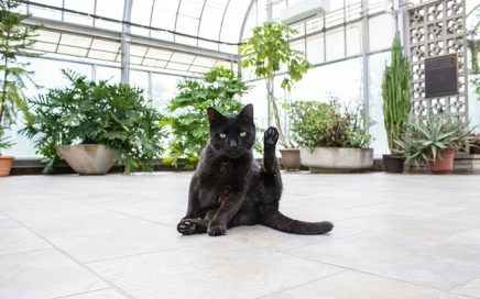 Welke kamerplanten zijn giftig voor katten?